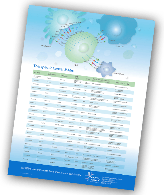 Get A Free Therapeutic Cancer MABs Poster - QED Bioscience, Inc